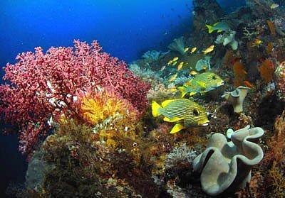 bawah laut raja ampat