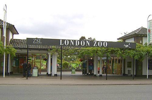 zsl zoo london